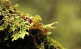 Plantar Uma Árvore | Plante esta Ideia