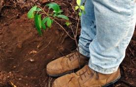 Projecto Chloris – Conservação de Habitats em Sociedade