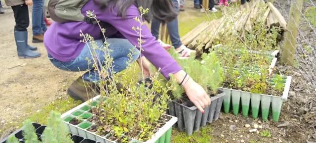 Como plantar e cuidar