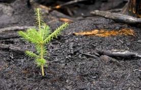 Incêndios à Parte… Falemos de Problemas e Soluções