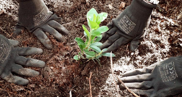 Mãos na Serra – Protocolo para Desenvolvimento de Programa Escolar