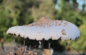 Fungos: os aliados para recuperação de solo