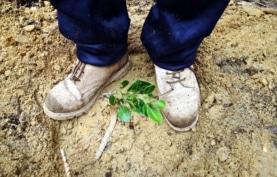 Economia Ambiental e Restauro de Ecossistemas