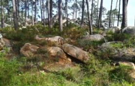 Matos mediterrânicos: nichos de biodiversidade e alquimia aromática